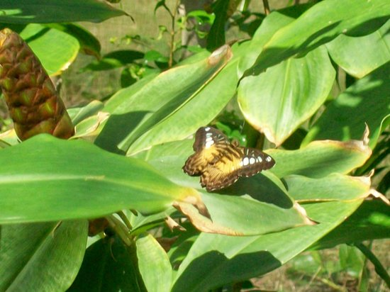 The Butterfly Farm (La Ferme des Papillons): pretty plants and flowers as well as flying flowers