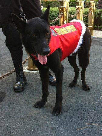 Makati Shangri-La Manila:                   watch dog in christmas dress