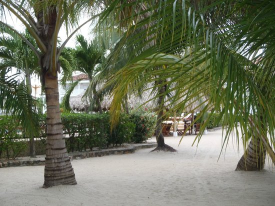 The Placencia Hotel and Residences :                   Beach in front of pool