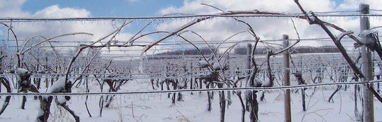 Atwater Estate Vineyards: Winter in the vineyards