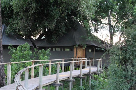 Wilderness Safaris Mombo Camp 사진