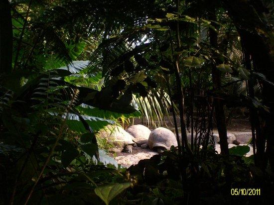 Zoo Zurich: :)