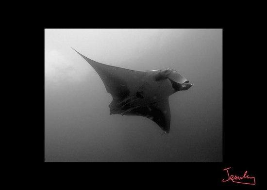 Coral Diving Club: Mantas Ray 5 meter