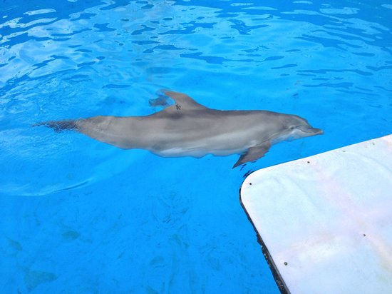 Nicholas The Dolphin Picture Of Clearwater Marine