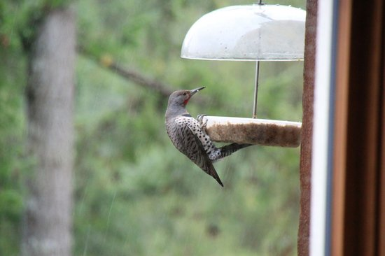 Bowen Island Hideaway: We are a great birding destination with forest, lake and meadow birds visiting us all year round