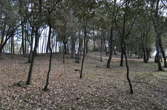 Masferran: Bosque