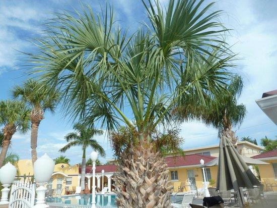 Gulf Tides Inn 사진