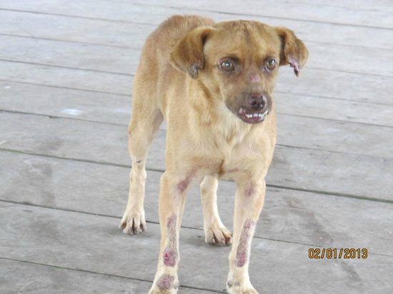 Amazon Rainforest Lodge:                   The poor dog who looks abused! His mouth is damaged, thats why he looks evil.
