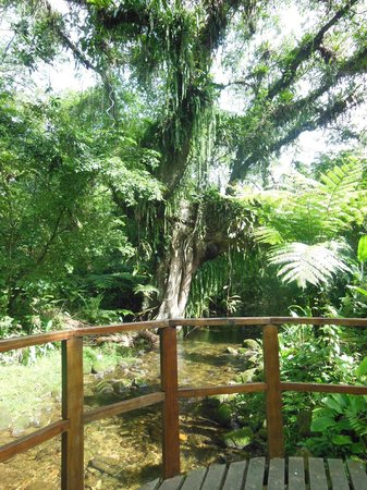 Reserva Natural Salto Morato:                   Trilha da Figueira