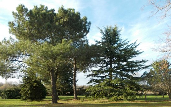 Château La Gravière : Les arbres majestueux du parc