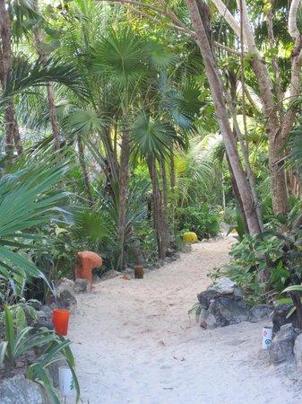 """Dos Ceibas Eco Retreat :                   Dit is """"de weg"""" die alle cabanas met elkaar verbindt"""