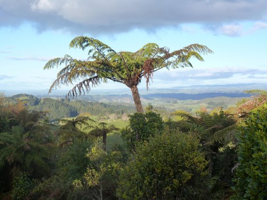 Te Tiro:                   View
