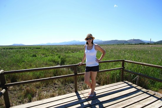 Parque natural s'Albufera de Mallorca: From a viewing platform above the reedbeds