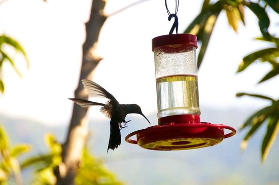 Oscar's Place:                   Humming birds