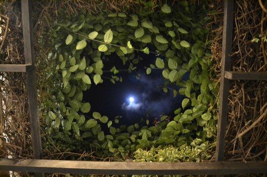 Posada Piano y Papaya Los Roques:                   Vista de noche de la hamaca paraguaya