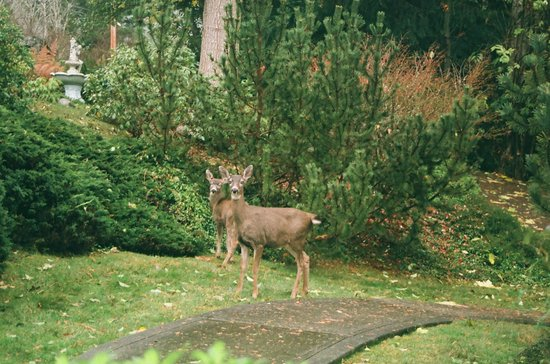 Cape Cod Bed & Breakfast: Deer enjoying the garden