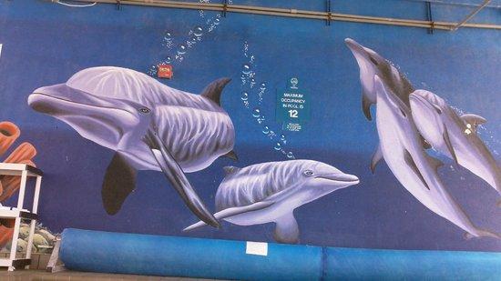 ذا دولفين إن: Another shot of the mural