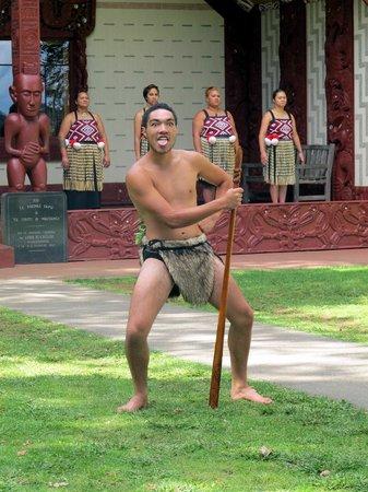 Waitangi Treaty Grounds:                   Maori cultural performance