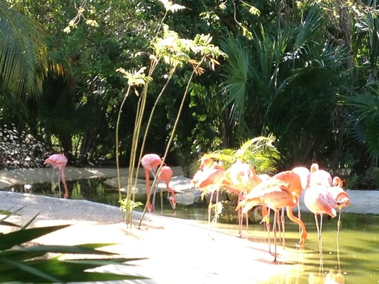 Mayan Palace Riviera Maya : Flamingos in the sanctuary in The Grand Mayan