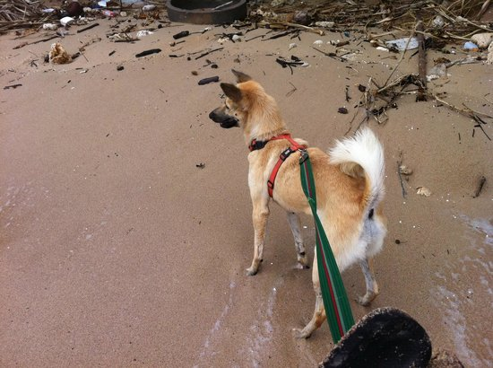 Lanta Animal Welfare:                   Beach walk