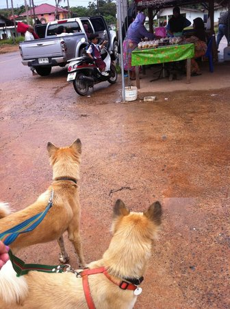 Lanta Animal Welfare:                   Dog Walking