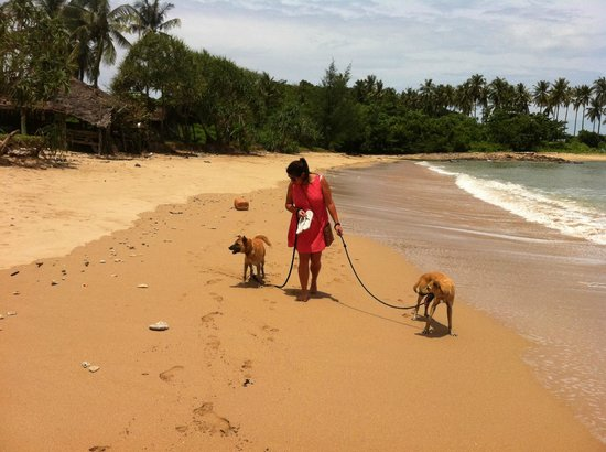 Lanta Animal Welfare:                   Beach walk on Koh Lanta