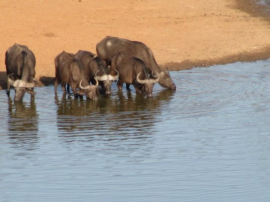 Victoria Falls Safari Lodge:                   Animals at the pond