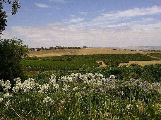 Coriole Winery: The view from the cellar door