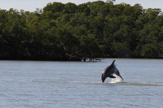 Everglades Area Tours:                   The big jump