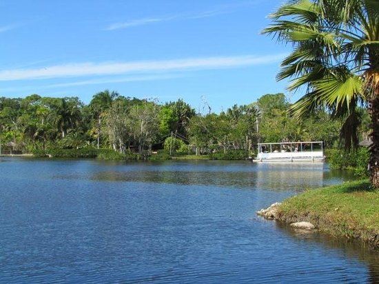 Lake Victoria Picture Of Naples Zoo At Caribbean Gardens Naples Tripadvisor