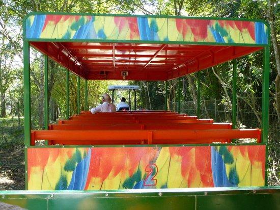Safari Train With Tractor, Driver And Guide: Fotografía De