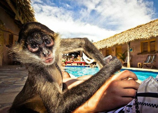 Casa De Olas: Local monkey at the casa....loves ice!
