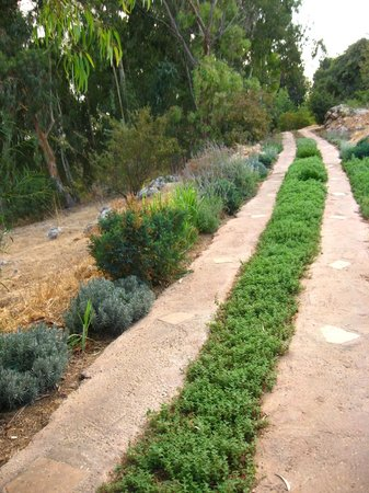 Hotel Mitzpe Hayamim:                   Part of the garden - even the paths are utilized for planting