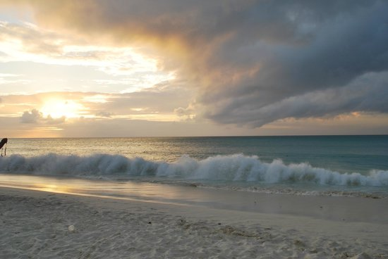 Tropicana Aruba Resort & Casino: Waves on Eagle Beach