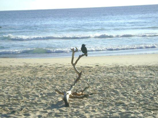 Pacific Palms Resort: Elizabeth beach