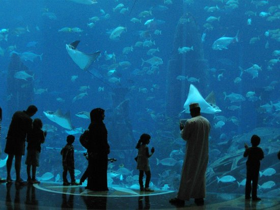 Atlantis, The Palm:                   Aquarium