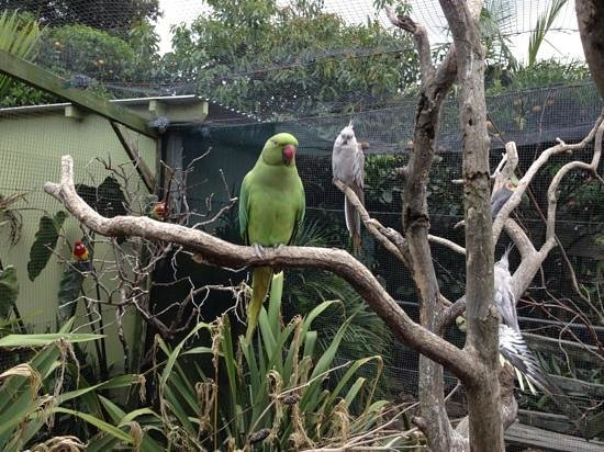 The Parrot Place : green parrot