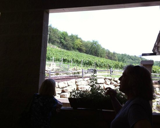 Wollersheim Winery: Guide explaining the vines growing on the hillside and how soil and slope effect taste.