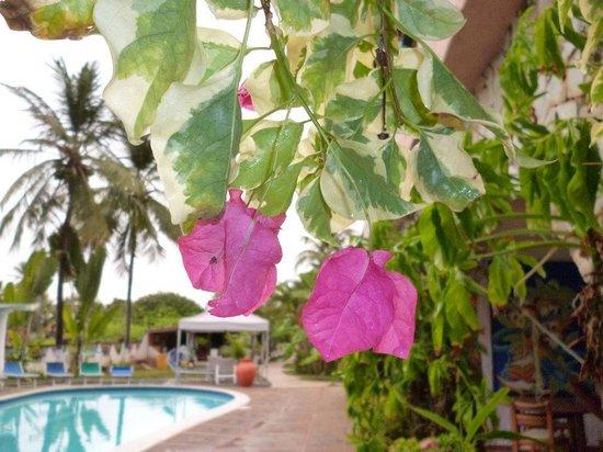 Hotel Coco Paraiso:                   Piscina do hotel