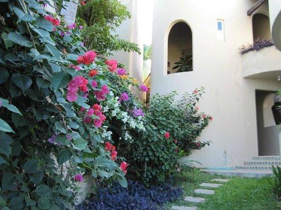 Villa Sol y Mar:                   flowers in back