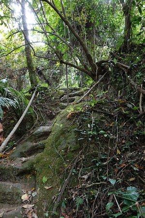 Khao Mai Kaew Cave: Trail to cave.