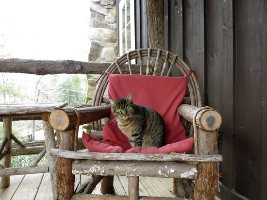 Lake Rabun Hotel & Restaurant:                   Lap kitty on Balcony overlooking garden