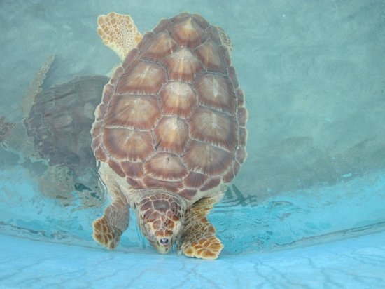 Na Balam Beach Hotel:                   Turtle museum