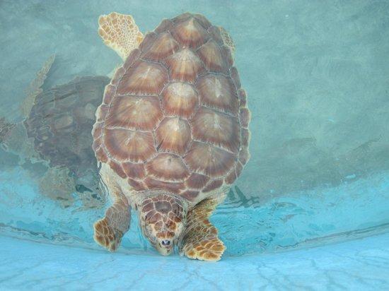 Na Balam Beach Hotel:                   Turtle museum                 