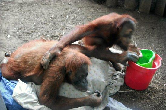 Toronto Zoo:                   Monkeys