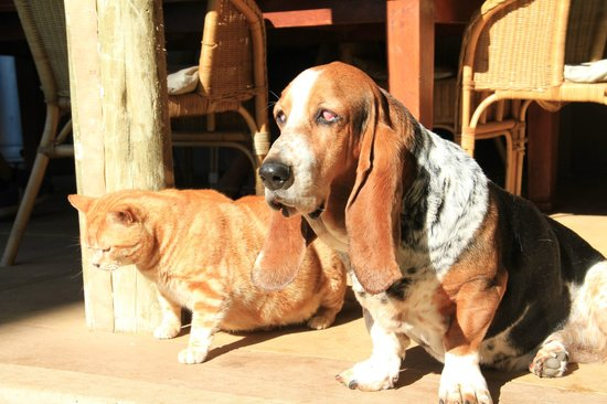Thabile Lodge:                   Two of the four legged residents.