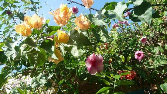 Le Recif des Almadies: Le jardin