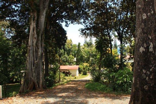 LES CASES DE PLUM : Gîte - Vue du bungalow
