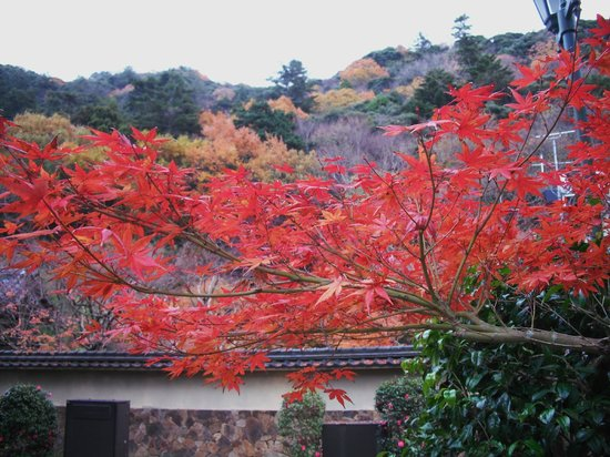 Tottori, Jepang: Colored leaves in Ochidani Park