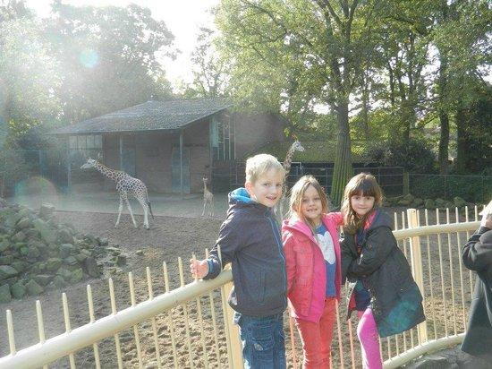 Ouwehands Dierenpark Rhenen:                   Samen bij de giraffen